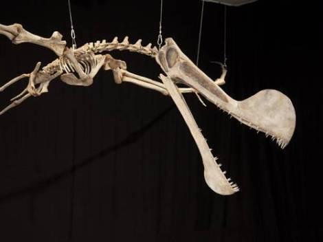 Tropeognathus cf. mesembrinus no Museu Nacional da UFRJ, o mais importante réptil encontrado no Brasil, na Chapada do Araripe Ana Branco / Agência O Globo