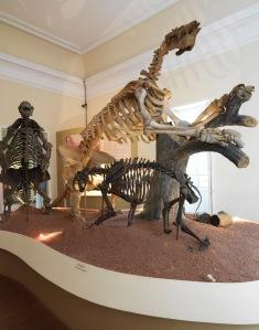 Esqueletos de duas Preguiças Gigantes  e de um Dentes-de-Sabre  (ao fundo). que se encontram na exposição do Museu Nacional.