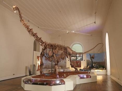 Sala da paleontologia do Museu Nacional da UFRJ: espaço de pesquisa para arqueólogos e antropólogos e lugar de cultura e conhecimento para o grande público. Ao fundo a reconstituição da Chapada do Araripe.